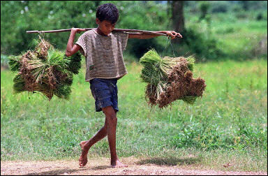 Poverty in Cambodia (AFP)