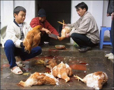 Bird Flu Outbreak (AFP)